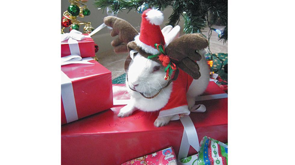 A pensar dos veces antes de regalar mascotas en Navidad - 5
