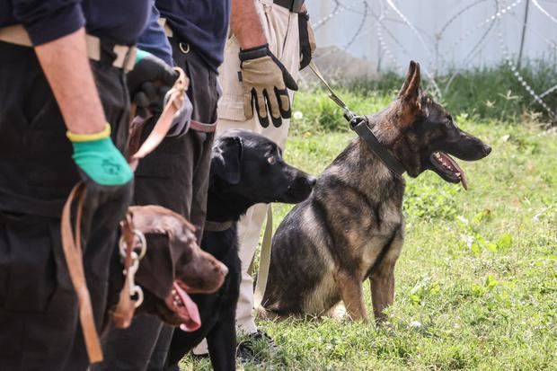 Although it is not clear who the dogs belonged to, several were found in the section of the airport used by U.S. forces.  (Kareem Sahib / AFP)