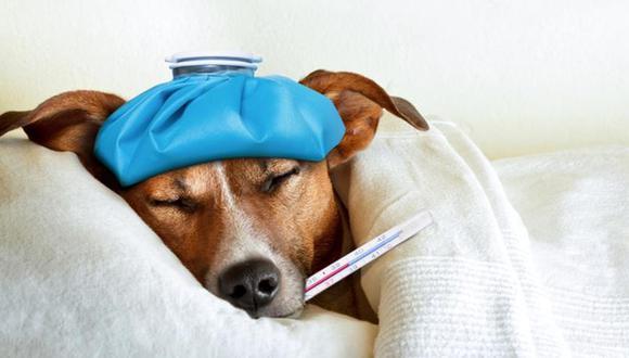 En el caso de los canes, el resfriado es un complejo de enfermedades que afectan al sistema respiratorio (Foto: Freepik)