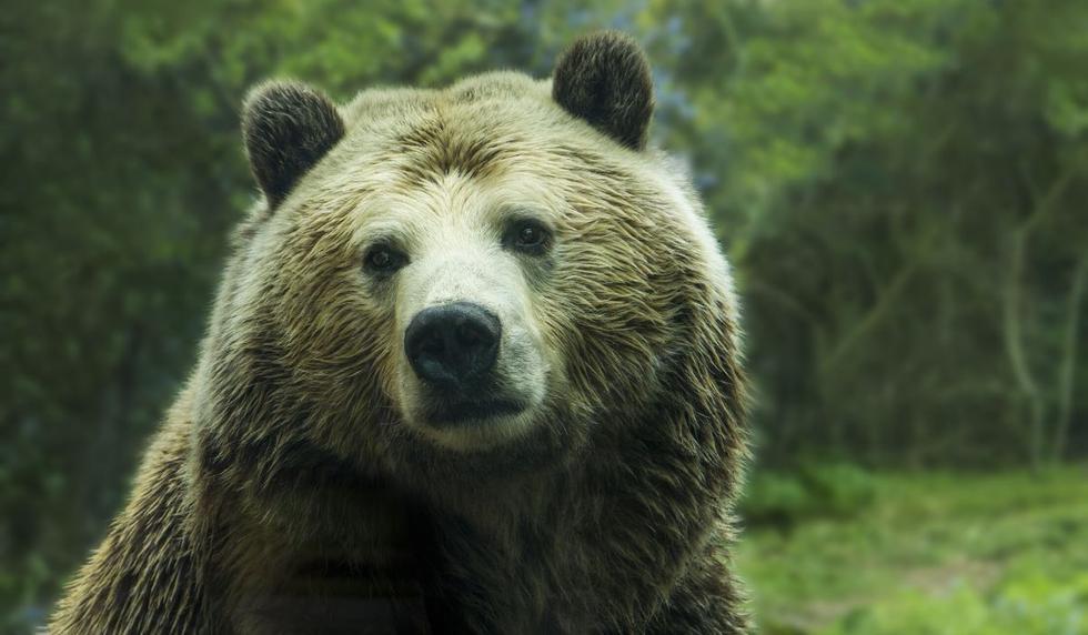 El comportamiento del oso asombró a los usuarios. (Foto: Referencial - Pixabay | YouTube)