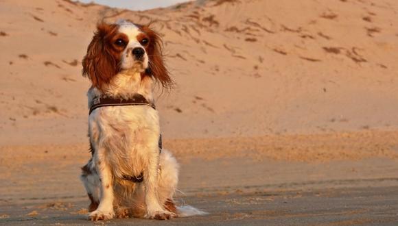 La reacción del can al reencontrarse con su familia se volvió viral en Facebook. (Foto: Referencial/Pixabay)