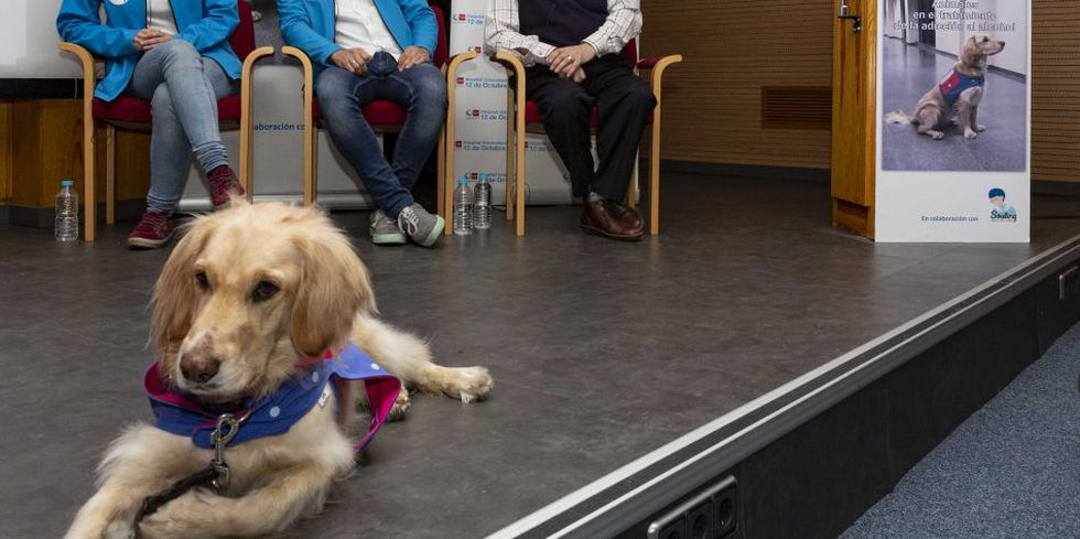 Los perros han sido adiestrados para ayudar a los pacientes en su lucha contra el alcoholismo. (Foto: Comunidad de Madrid)