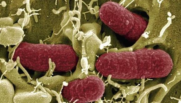 Logran detectar el cáncer de hígado usando una bacteria