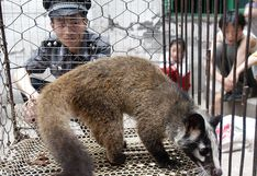 China prohíbe comercio de animales salvajes hasta que epidemia de coronavirus de Wuhan termine