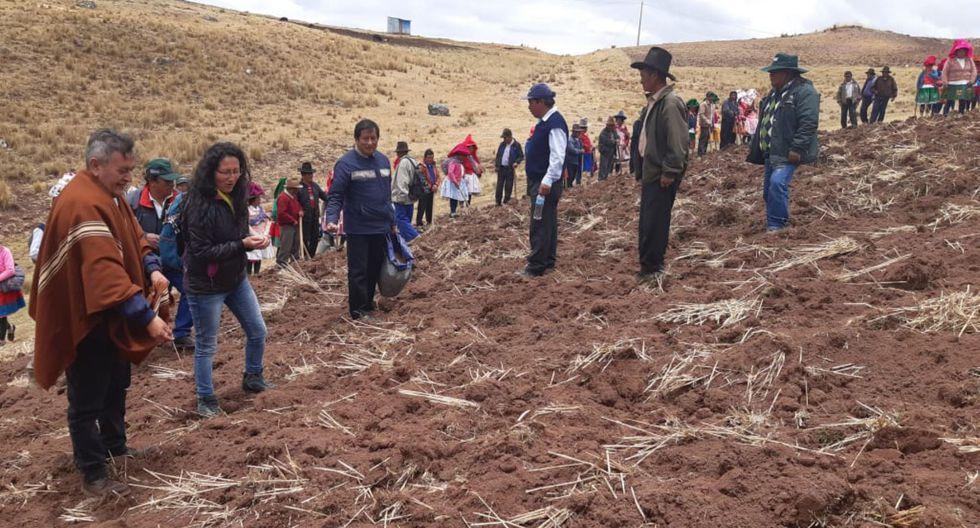 Los beneficiarios también contarán con asistencia técnica del equipo de especialistas y técnicos de la Dirección Zonal Áncash de Agro Rural durante el proceso de siembra y cosecha de los pastos cultivados. (Andina)