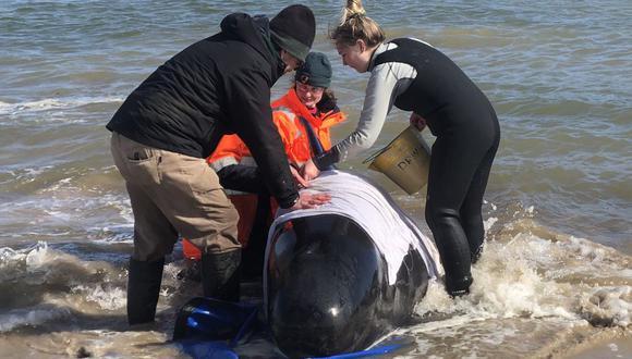 Un grupo de personas ayuda a una ballena varada en la costa oeste de Tasmania, Australia. (AFP).