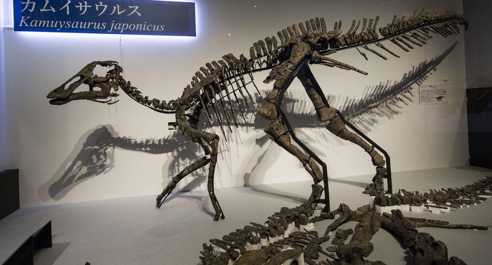 """Réplica de tamaño natural del llamado """"Kamuysaurus japonicus"""". (Foto: AFP)"""