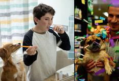 WUF: 7 series y películas en Netflix para ver con tu perro antes de que termine la cuarentena