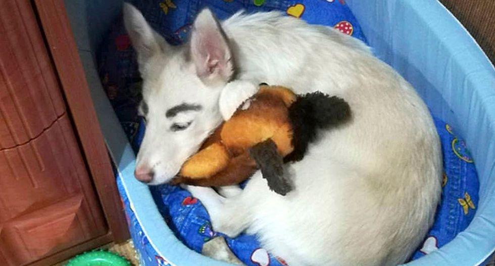 La perrita, de solo 5 meses, vivió en estado de abandono durante un tiempo, hasta que fue rescatada por un grupo de voluntarios que la llevaron a un refugio   Foto: Oksana Maymsina