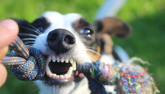 Si se acumula mucho sarro se pueden producir infecciones en la boca de tu perro. (Foto: Michael Bußmann / Pixabay)