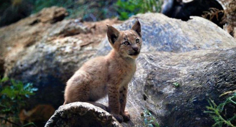 La especie había aparecido en el primer Listado de Especies Extinguidas en España