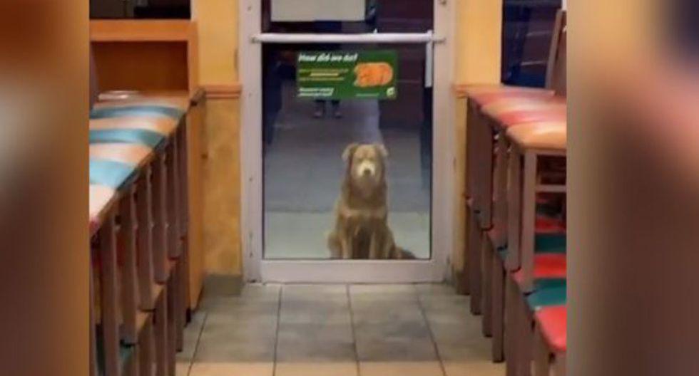 'Sally' y la odisea que atraviesa al buscar comida para sus cachorros. | Foto: Captura