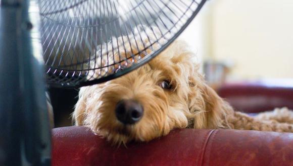 Ten en cuenta que exponer a la mascota a ambientes muy fríos por mucho tiempo les genera estrés. (Foto: Pixabay)