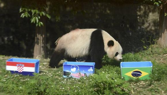 China prohíbe usar pandas como adivinos del Mundial