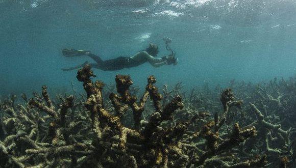 WWF advierte sobre nueva extinción masiva de especies