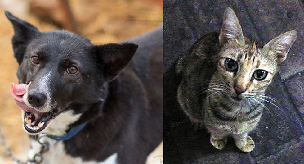 Ni perros ni gatos son un problema de salud pública, según expertos en temas veterinarios. (Foto: Flickr).