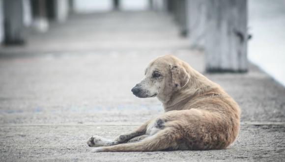 Una cámara de seguridad registró el preciso instante en que un perro discapacitado es abandonado; sin embargo, la historia tuvo final feliz. (Foto: Referencial/Pixabay)