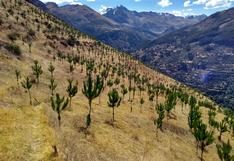 Apurímac: se espera terminar el año con 27 millones de árboles plantados