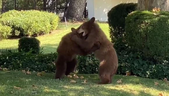 Los osos se estaban divirtiendo en el jardín. El video de estos animales no tardó en volverse viral. (Foto: Crescenta Valley Sheriff's Station / Facebook)