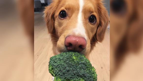 Perrito hizo hasta lo imposible para lograr comer un poco de brócoli. | Foto: @moxiethetoller