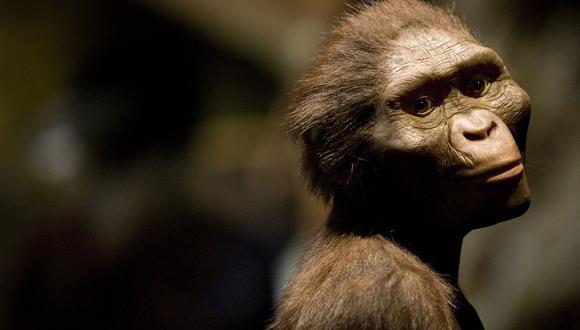 "La especie de Lucy, ""Australopithecus afarensis"", se extinguió hace unos 3 millones de años. (Foto: Dave Einsel/Getty Images/AFP)"