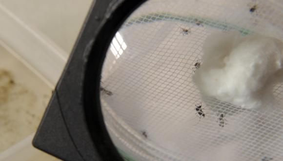 Chikunguña: confirman primer caso en Colombia y dos en EE.UU.