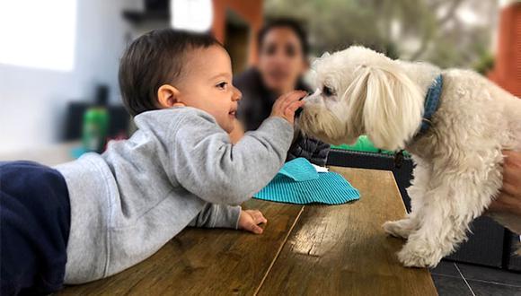 Es muy importante estar presente en los primeros encuentros de los niños con los animales, por más que la mascota sea dócil y de confianza. (Foto: Andrea Carrión)