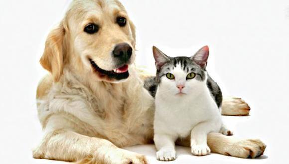 ¿Por qué los gatos son más independientes que los perros?