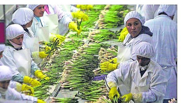 Sunafil mencionó que se mejoraron las condiciones de seguridad y salud en el trabajo de 296,367 trabajadores agroindustriales. (Foto: GEC)