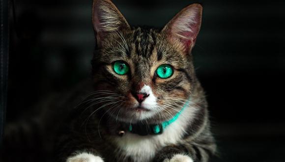La gata logró advertir del problema a su ama, quien llamó a la empresa de gas. (Foto referencial - Pexels)