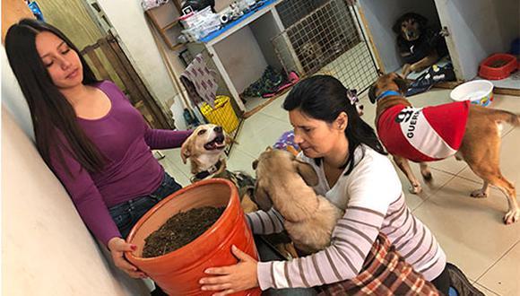 Sara Morán y su ayudante Natalie preparan la maceta en donde colocan las cenizas de Josué para darle una digna despedida. Al rededor las acompañan algunos perros del albergue Milagros Perrunos.