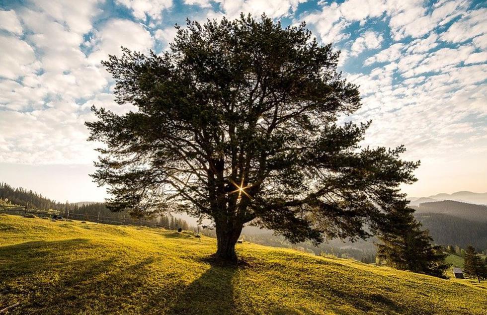 El 1 de septiembre se conmemora en el Perú el Día del Árbol | Foto: Pixabay / danfador (Referencial)
