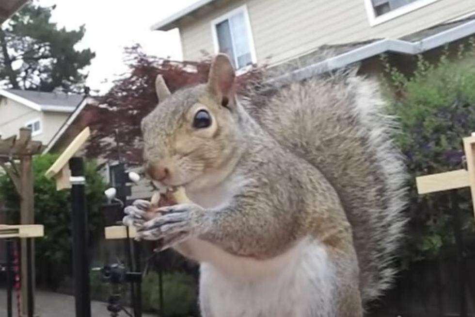 Cuando un youtuber quiso pasar la cuarentena observando aves jamás imaginó que terminaría convirtiéndose en un entusiasta de las ardillas. (Fotos: Mark Rober en YouTube)
