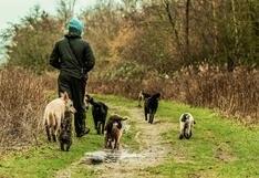 ¿Tu perro te sigue a dónde vayas?