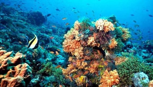 Los arrecifes de coral están sufriendo este año una fuerte ola de calor submarina por tercera vez desde que se tienen datos, según los científicos. (Foto: EFE)