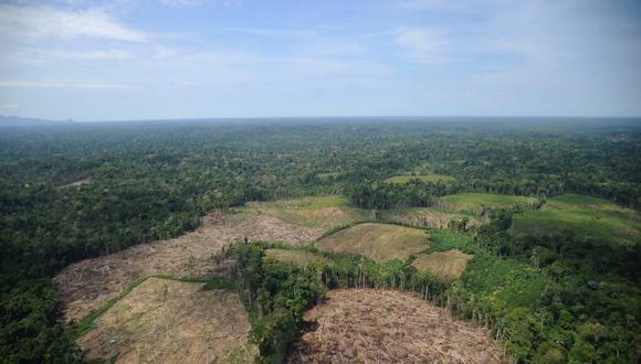 Desde el 1 enero hasta el 13 de agosto del 2021, 12.345 hectáreas de bosques han sido depredadas en Ucayali.  Foto: Hugo Alejos.