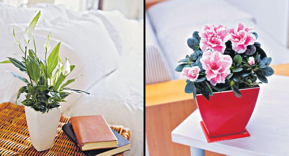 Plantas en casa: descubre cuáles son ideales para interiores - 2