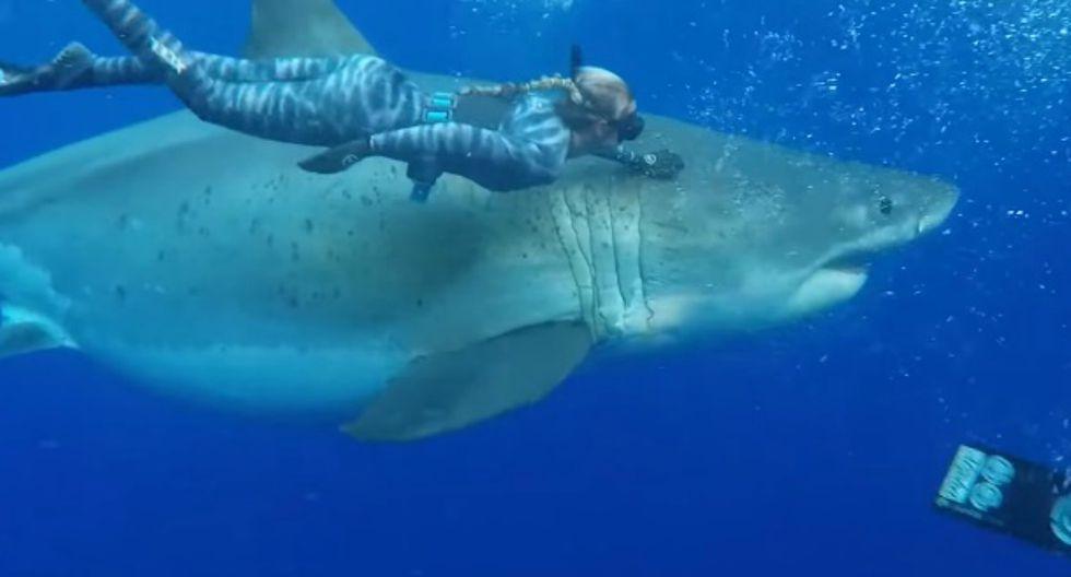 Se viralizó en YouTube el inesperado encuentro entre un grupo de buzos y un tiburón blanco. Ocurrió en Hawái. (Foto: Captura)