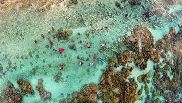 Jardín de Corales en la Laguna de Tahaa, en la Polinesia francesa.