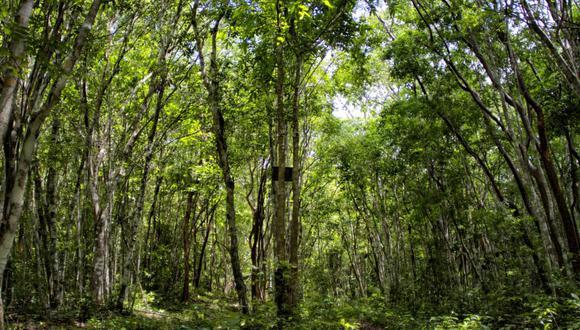La conservación de bosques por el esquema ARA está ayudando a mantener los flujos de agua de las cuencas y vertientes que abastecen a las comunidades. Foto: Eduardo Franco Berton.