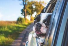 WUF: ¿Vas a viajar en carro con tu mascota? ¡Revisa estas recomendaciones!