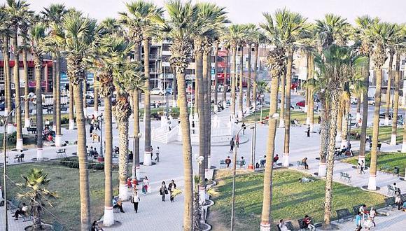 Chincha: Minam pidió no talar palmeras de la Plaza de Armas