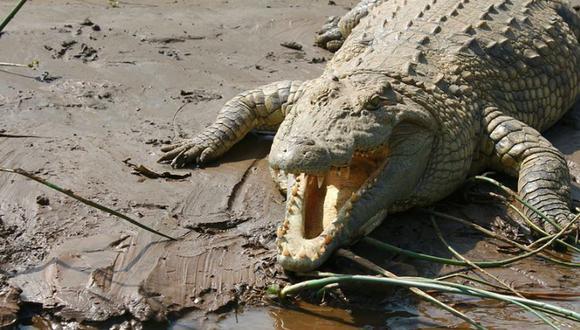 Cocodrilo atacó a un hombre que estaba descansando en una playa. (Foto: Pixabay)
