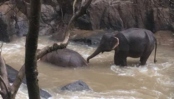 Las autoridades tailandesas compartieron esta imagen de un elefante sobreviviente que intenta revivir a su compañero. (KHAO YAI NATIONAL PARK).