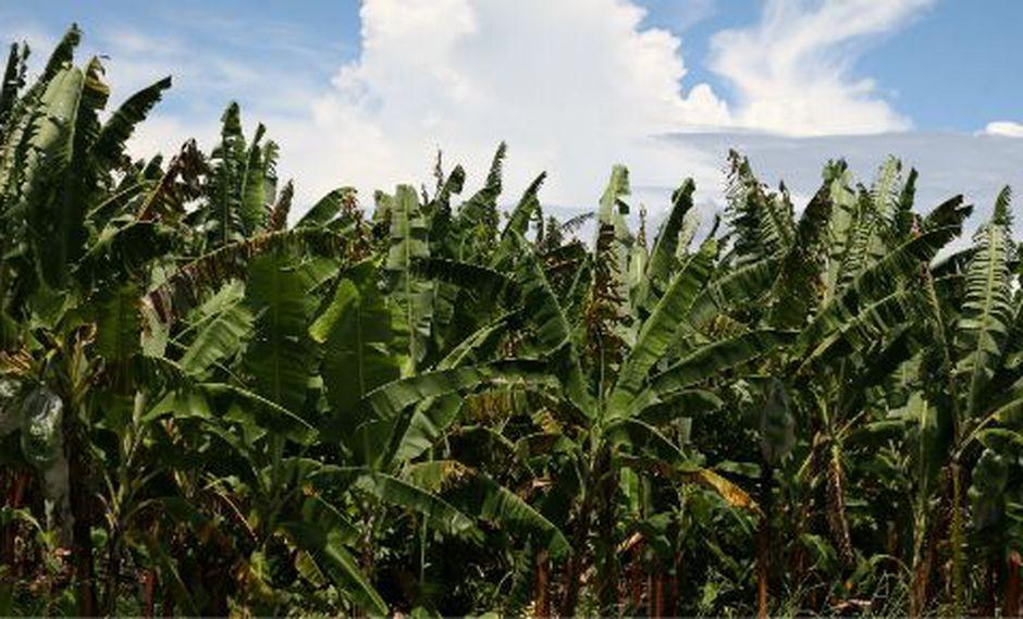 El agro compartirá información para mejorar sus procesos. (Foto:; GEC)