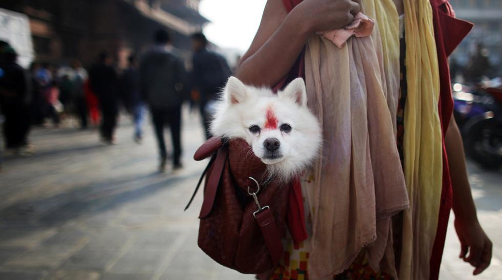 El Tihar, un festival en Nepal que festeja a los perros - 5