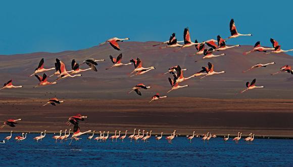 Son 23 áreas naturales protegidas que permanecerán cerradas hasta el 28 de febrero.(Foto: Sernanp)