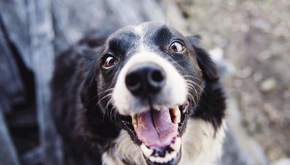 El emocionante reencuentro entre un perro y su dueña después de tres años separados