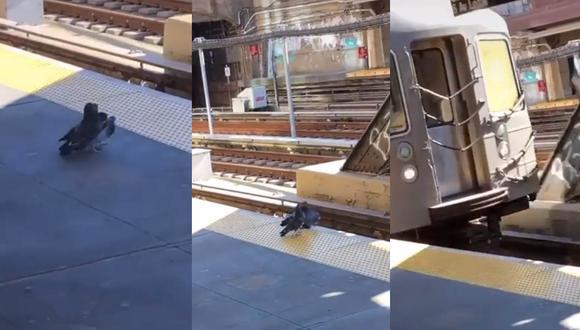 Un hecho aberrante y sin precedentes ocurrió en las vías del tren de Nueva York. Dos palomas asesinaron a otra.  | Foto: @justthingsiguesss