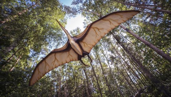 Dinosaurios. (Foto referencial: mrganso en Pixabay. Bajo licencia Creative Commons)